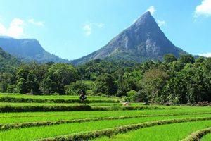 Sri-Lanka-Knuckle-Mountain-Range