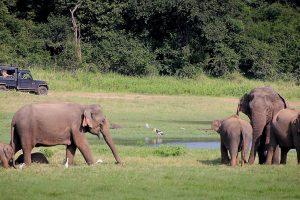 elephant-2131326_1920 (1)