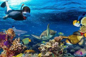 snorkel-in-cancun-tour